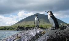 Escorted Gay Group Vacation in the Galapagos Islands