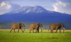 Gay African Safari in Kenya and Tanzania