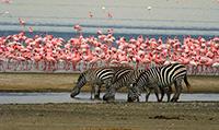 Gay Escorted African Safari