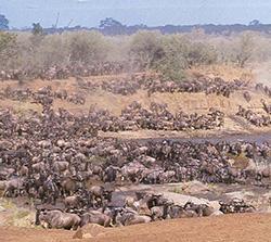 Gay African Safari