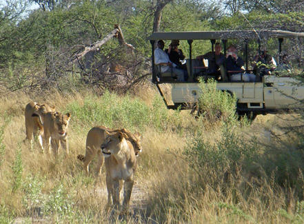 Gay Safari Tours South Africa