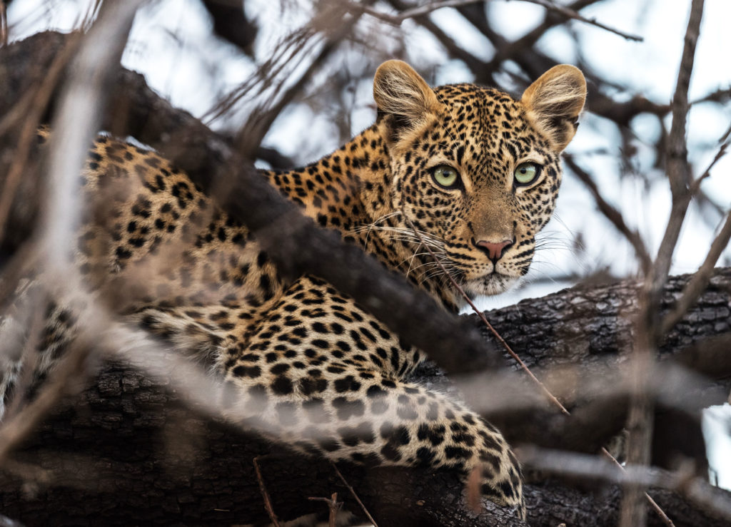 gay travel safari in Africa