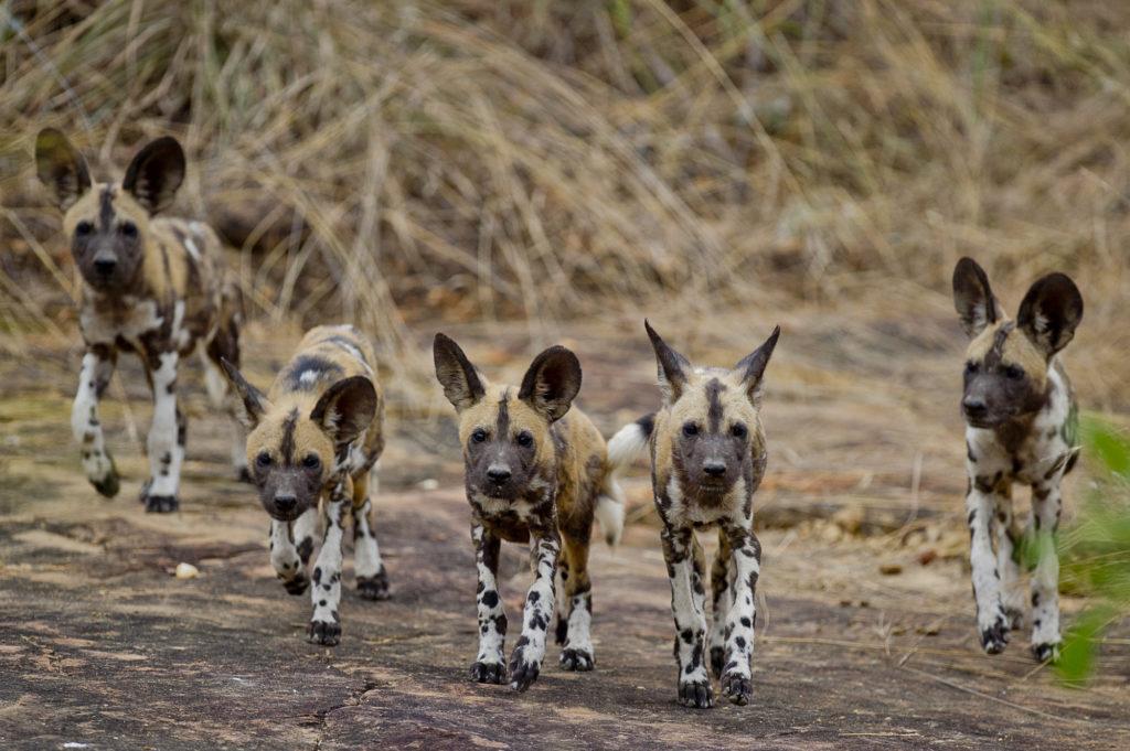 LGBTQ group safari in Tanzania, Africa
